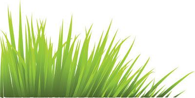 Green Desert Grass.eps